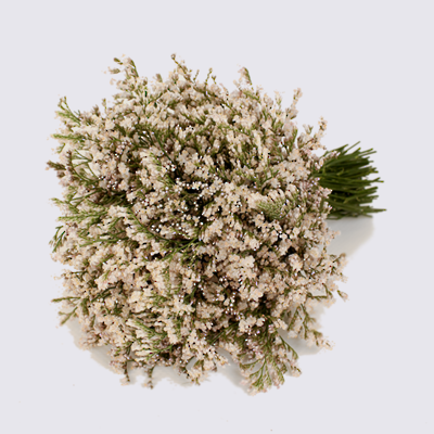 Supreme Whitelight Limonium