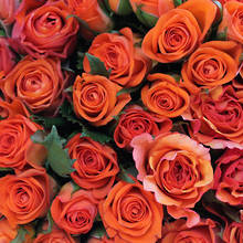 Assorted Orange Roses