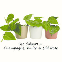 Philodendron Heartleaf & Set Ceramic Colour 9 unit Special