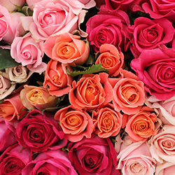 Assorted Pink Roses - Thumb