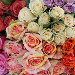 Assorted Roses - thumb
