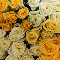 Assorted Yellow Roses - Thumb